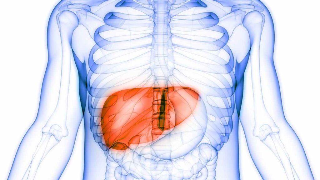 cancro fegato